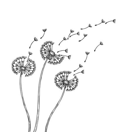 Siluette del dente di leone. Denti di leone erba polline semi di piante delicate che soffia vento lanugine fiore astratto vettore primavera grafica. Illustrazione del dente di leone lanuginoso, flora in fiore