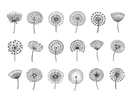 Dandelion set. Doodle hand drawn dandelions monstera delicate plant seeds summer botanical fluff flower isolated vector silhouettes. Illustration of dandelion fluff, botanical flower softness  イラスト・ベクター素材