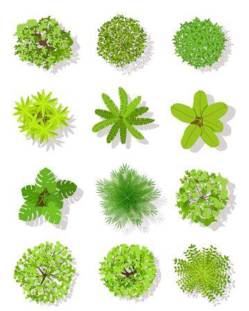 Baum mit Draufsicht. Landschaftsplanbäume mit Blättern und Büschen. Gartenbepflanzungsvektor lokalisiert auf weißen Gestaltungselementen Vektorgrafik