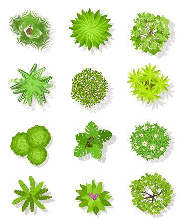 Árbol de vista superior. Árboles verdes con hojas y arbustos para el plan arquitectónico del paisaje. Vector de plantación de jardín de visualización aérea aislado en conjunto blanco Ilustración de vector