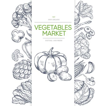 Vegetable markets banner template with hand drawn green. Illustration of vegetarian healthy vegetable, pumpkin and brocoli, corn and pepper