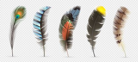 Realistic bird feathers. Detailed colorful feather of different birds. 3d vector collection isolated on transparent background. Illustration feather bird, peacock fluffy elegance plumage
