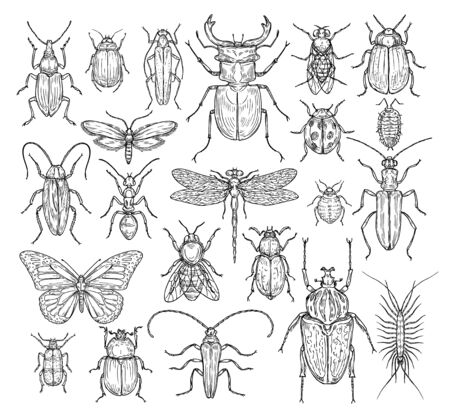 Insects hand drawn. Butterfly, beetle and fly, ant. Dragonfly, ladybug and bee, lice and cockroach. Retro sketch engraving set. Illustration of insect bee and dragonfly, butterfly and ant Stock Illustratie