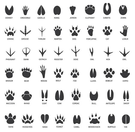 Ślady zwierząt. Ślady łabędzia, lamy i osła, kota. Sowa, pies i mysz, gołąb i zebra łapa na białym tle wektor zestaw. Ilustracja śledzi dzikie, niedźwiedzie i wilki, nadrukuj czarną gazelę krokodyla