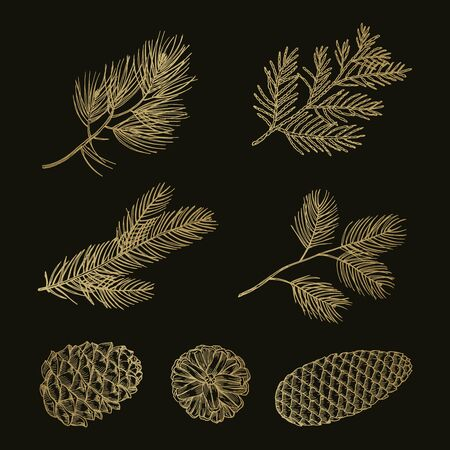 Gold fir branches and cones doodle vector set. Illustration pine cone and tree christmas twig
