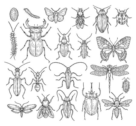Insects sketch. Butterfly, beetle and fly, ant. Dragonfly, ladybug and bee. Vintage hand drawn engraving vector collection. Illustration insect dragonfly and beetle, butterfly and ant Ilustração