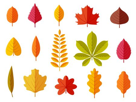 Fall leaves. Colorful autumn leaves, leaf chestnut elm oak, maple forest with yellow and orange foliage. Flat vector isolated set leaf and foliage, botany maple and oak, chestnut and elm illustration