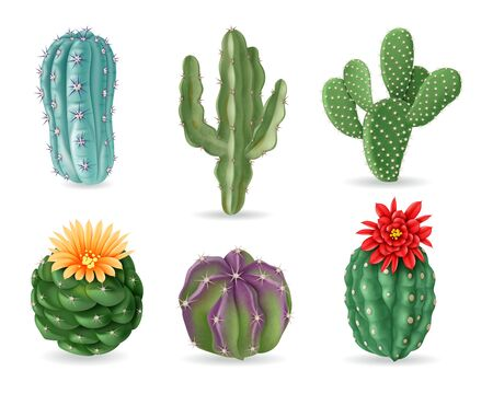 Realistic cactuses. Decorative desert exotic cactus prickly plants. Wild and houseplant succulent cacti. 3d isolated vector set. Home interior cactus, green cacti with prickly illustration 일러스트
