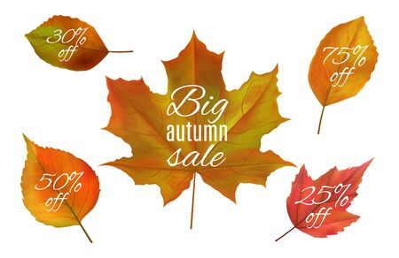Autumn sale. Fall leaves banners. Realistic vector autumn leaf with sale prices. Yellow and red foliage isolated on white background. Fall sale, autumn discount illustration