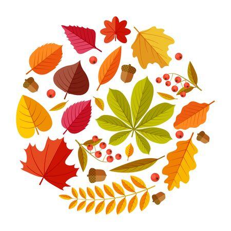 Flat autumn leaves. Colorful fall park leaf maple elm oak chestnut, geometric flat foliage. Round fall themed vector design. Illustration leaf autumn, foliage botanical floral