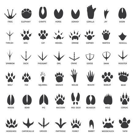 Ślady zwierząt. Odciski łap zwierząt. Słoń i goryl, żubr i wilk. Kot, pies i jeleń, niedźwiedź czarny ślady wektor zestaw. Ilustracja dzikiej przyrody, łapa wilka, czarny niedźwiedź tropikalny