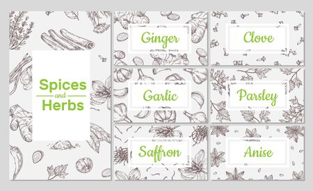 Spices sketch. Hand drawn culinary organic herbs. Ginger and garlic, clove and anise. Vector packaging design, flyers and cards templates. Spice organic herbal, culinary sketch ingredient illustration