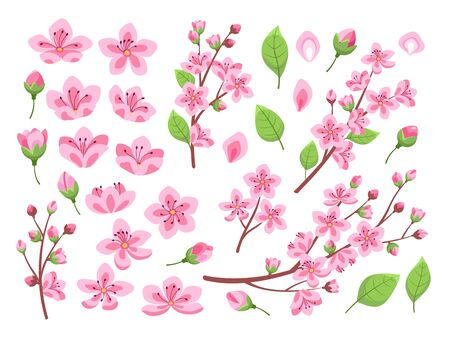 Sakura blossom. Asia cherry, peach flowers. Isolated almond garden or park plants. Pink budding floral petal and branches, leaf vector set. Branch spring floral blossom flower illustration Vector Illustratie