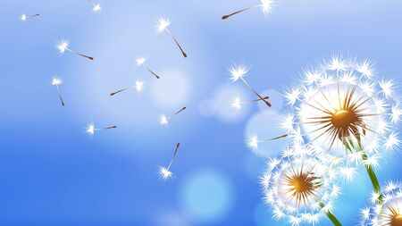 Realistic dandelion. White fluffy flower, flying seeds on blue sky. Spring summer season banner. Floral vector background dandelion flying, plant botany fluffy illustration Vektorgrafik