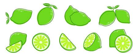 Cut lime. Fresh citrus fruit, slice and leaves. Isolated green lemon illustration, juicy organic fresh detox vitamin vector illustration. Fruit lemon vegetarian cut, vitamin detox and refreshing Векторная Иллюстрация