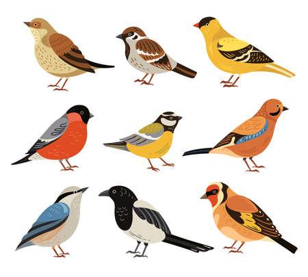 Winter birds. Isolated wild bird, cartoon chickadee bullfinch robin. Wildlife autumn forest animals, magpie and sparrow vector illustration. Wild winter bird, titmouse and bullfinch