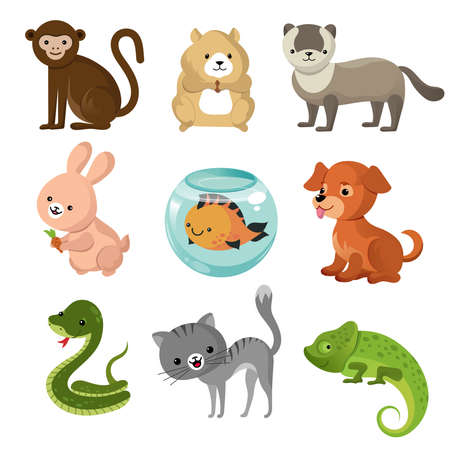 Cartoon cute home pets vector collection. Set of pets animal, illustration of cartoon pets lizard, rabbit and snake