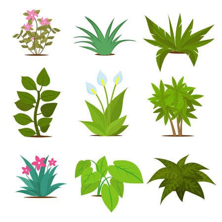 Colorful house plants isolated on white background. Plant green, vector flora houseplant and flower illustration