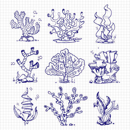 Ballpoint pen drawing seaweeds, corals, underwater plants on notebook page. Vector illustration
