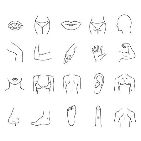 Line human male and female body parts vector set. Anatomy body part, contour leg and illustration