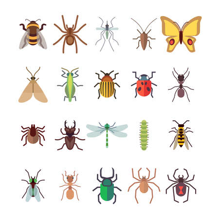 Flat insects icons set. Butterfly, dragonfly, spiders, ant isolated on white background. Vector insect ladybug and beetle, dragonfly and butterfly illustration Vektoros illusztráció