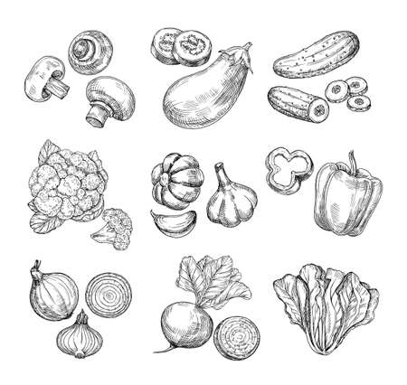 Hand drawn vegetables. Garden cauliflower, pepper and eggplant, champignons. Fresh vegan products. Sketch vegetable vector isolated set. Illustration of champignon and cucumber, cabbage and mushroom Vetores