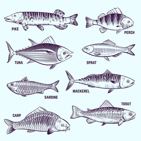 Hand drawn fishes. Restaurant menu seafood, salmon, tuna and mackerel sketch vector isolated elements. Illustration of fish pike and perch, sardine and mackerel
