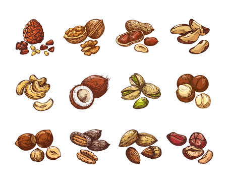 Cartoon nuts and seeds. Hazelnut and coconut, beans and peanut. Isolated vector set of cartoon natural nuts for healthy, vegetarian almond and walnut illustration