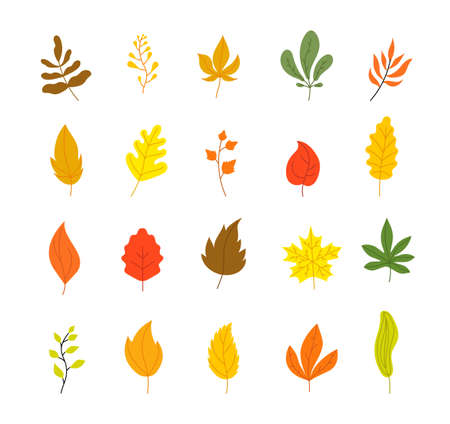 Autumn leaves collection. Tree leaf fall, flat marple yellow orange foliage. Season forest icons, isolated botanical utter vector decorations. Yellow autumn, fall maple and oak foliage illustration