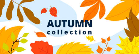 Autumn leaves banner. Isolated leaf, october fall wind and foliage. Thanksgiving or new collection, season sale utter vector abstract poster. Illustration background autumn, october foliage fall