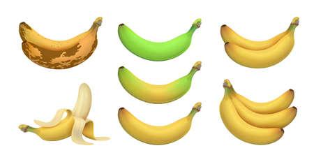 Isolated realistic banana. Tropical bananas, exotic fruits. Ripeness levels green underripe to brown rotten. Vegetarian vitamins raw vector set. Illustration tropical fruit banana, fresh healthy ripe Vettoriali