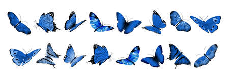 Realistic blue butterflies. Flying butterfly, isolated bright insects collection. Decorative spring summer and garden wild animals vector set. Illustration insect blue realistic, nature animal wing