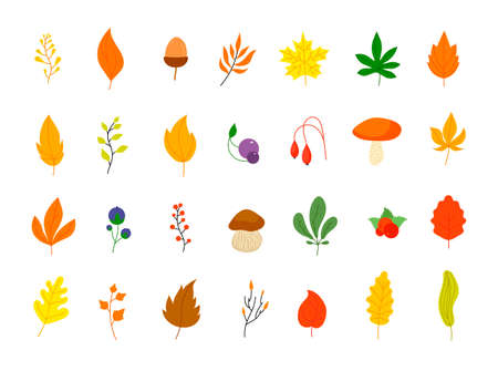 Flat autumn forest elements. Leaves berries icons, graphic leaf. Oak marple foliage. Acorn and rowan berry, thanksgiving fall vector set. Forest autumn botany, maple leaf and flora orange illustration