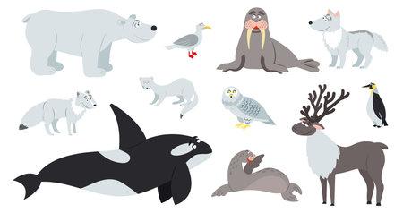 Arctic animals. Polar animal, cartoon cute bear walrus penguin. Flat fun antarctic seal, north pole wildlife. Reindeer fox childish vector set. Illustration arctic fox and seagull, penguin fauna