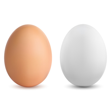 Two brown and white vector realistic eggs. 3D realistic vector illustration of chicken eggs for cooking, gastronomy and food.