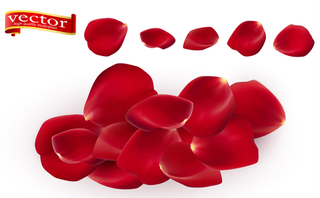 Red rose petals set, isolated on white, vector illustration.