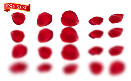 Red rose petals set, isolated on white, vector illustration. Red rose petals vector high detail.