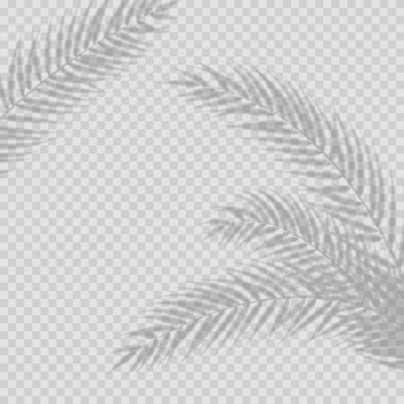 Transparent shadow overlay effect. Tropic leaf and window blind. Realistic window light and shadow. Shadow overlays effect for mockup presentations. Photo-realistic illustration with palm leaves.