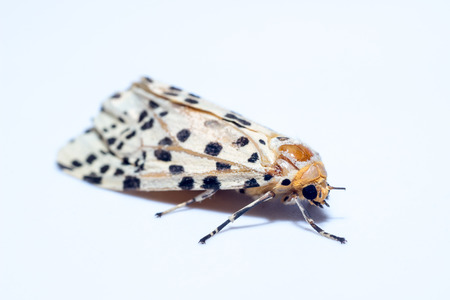close up moth on white background. Night butterfly