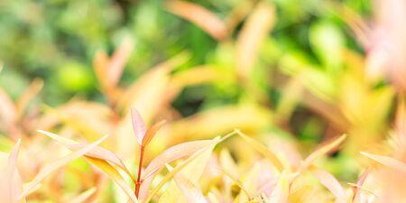 Nature orange leaves on blurred background 版權商用圖片