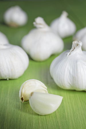 close up garlic on wooden table green color photo