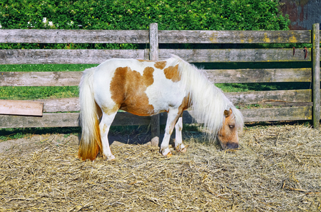 Photo of Pony, domestic horse pastures farm