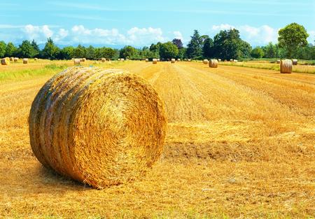 Hay bales on summer day landscape Stok Fotoğraf