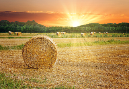 Hay bales in the scenic sunset landscape