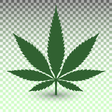 Marijuana leaf on transparent background in vector format Illustration