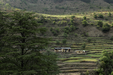 Terraced land with farm house, Himalayan foothills, India