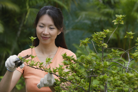 homeownership: Woman pruning plants