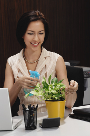 tends: A woman tends to a pot plant on her desk