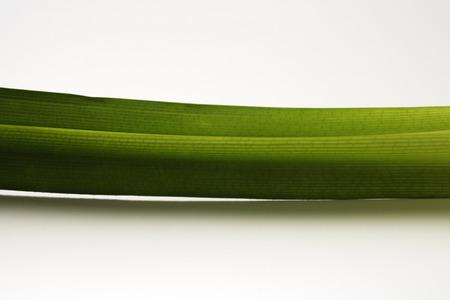 stalk of pandan leaf Imagens