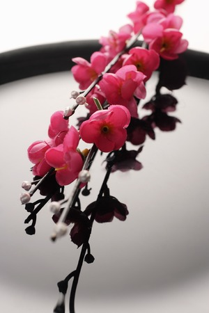 peach blossoms on a black plate